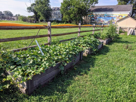 A community garden grows in Parkside along Euclid Avenue.