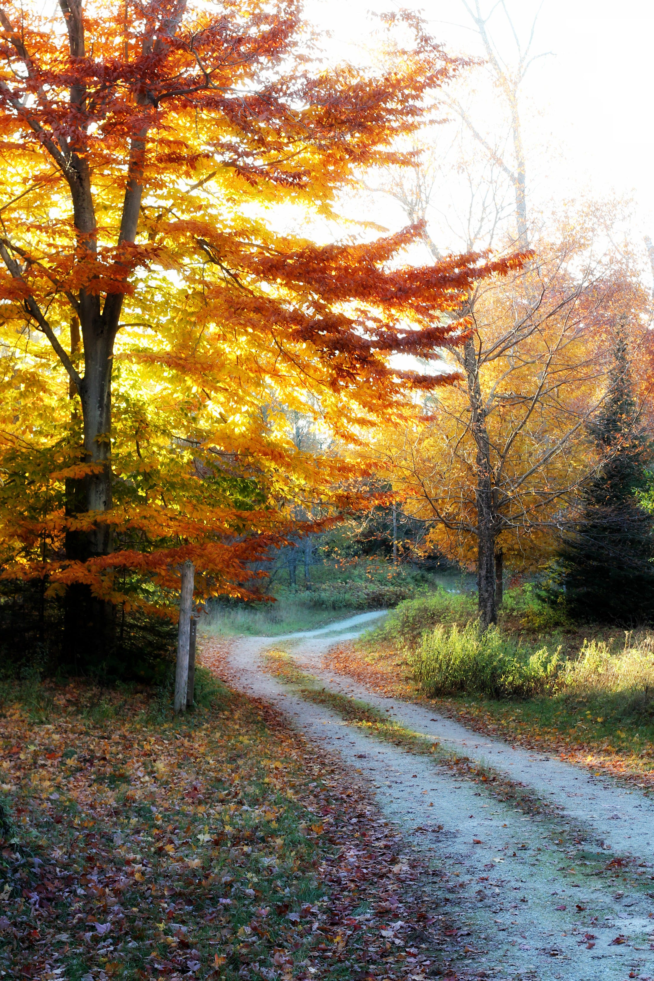 Hazy light peeks through fall colors on a path along Wisconsin Rustic Road 77 in Sturgeon Bay. Door County's five Rustic Roads offer a less-traveled way to check out fall colors.
