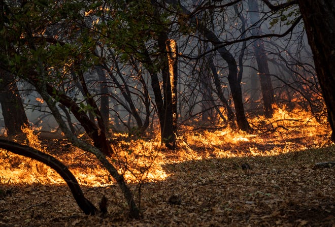 The Glass Fire burns trees and brush near Bell Canyon Road in Angwin, Calif., on Thursday, Oct.1, 2020, as it continues to spread through areas of Napa and Sonoma Counties. Since it began on Sunday, the Glass Fire has consumed over 60,000 acres and is at 6% containment.