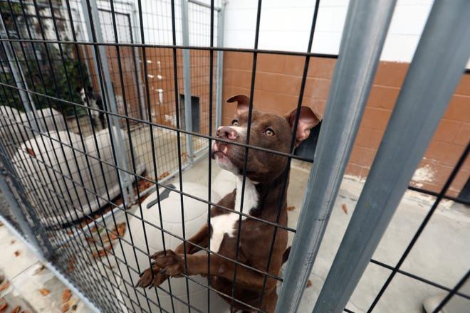 A dog is shown in an outside kennel at the current Muskingum County Dog Pound. The new facility is set to open in January.