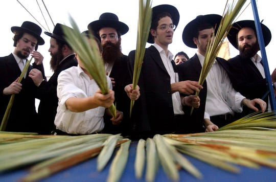 Orthodox men in Israel pick branches to make lulavs on Sukkot.