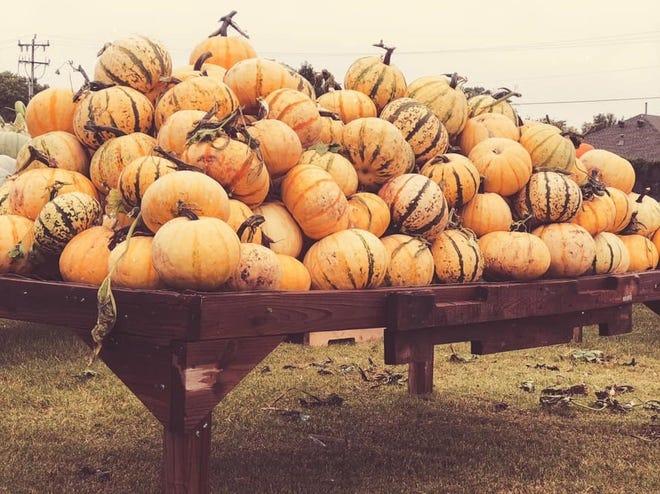 Oklahoma, Parkhurst Pumpkin Patch, Arcadia