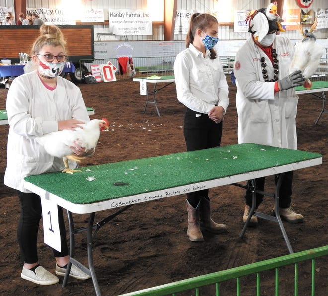 Izabella Mounts and Lauren Killiany have their chickens in Class II judged by Larry Lokai Saturday at the Coshocton County Fair. The poultry show featured chickens, ducks and turkeys examined for the marketability of their meat.