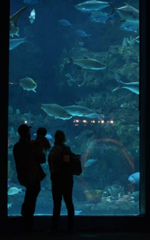 """Guests enjoy the North Carolina Aquarium at Fort Fisher Saturday Oct. 3, 2020 in Kure Beach, N.C. After a nearly six-month closure to help slow the spread of COVID-19. Returning guests found many changes, from new and safer operating and ticketing procedures to exciting new habitats like """"Otters on the Edge."""" [KEN BLEVINS/STARNEWS]"""