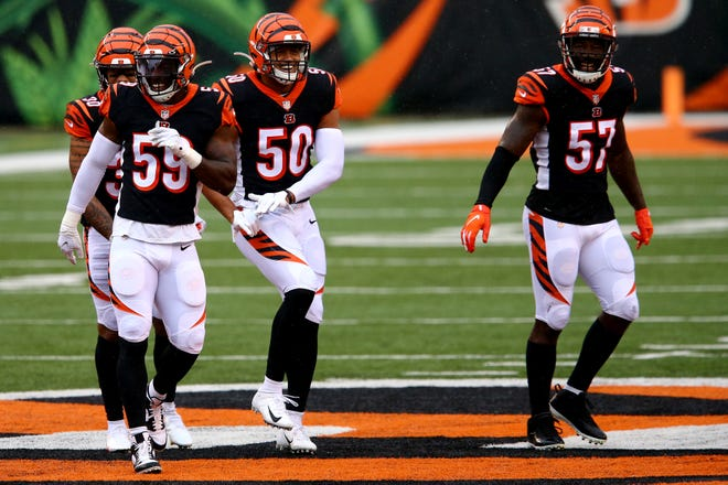 Cincinnati Bengals outside linebacker Jordan Evans (50), center, celebrates a sack in the fourth quarter of a Week 4 NFL football game against the Jacksonville Jaguars, Sunday, Oct. 4, 2020, at Paul Brown Stadium in Cincinnati. The Cincinnati Bengals won 33-25.