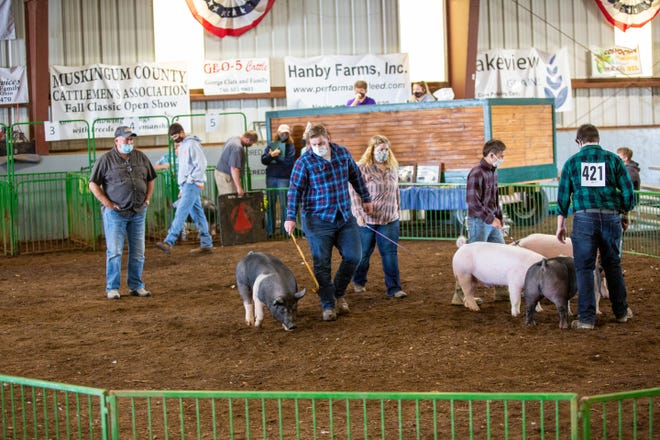 4-H members from around the county move their hogs around the ring during the Junior Fair market class hog judging on Sunday afternoon in Hunter Arena during the 2020 Coshocton County Fair.