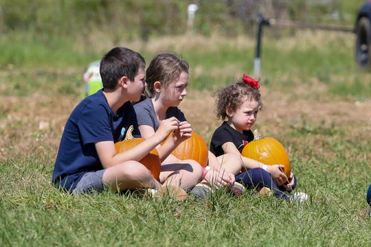 People grab their choice of pumpkins at Holland Farms on Saturday, October 3, 2020. Holland Farms is located at 2055 Homer Holland Rd. in Milton and currently is open 8 a.m. - 6 p.m. every day except Sundays, when the hours are 9 a.m. - 6 p.m.