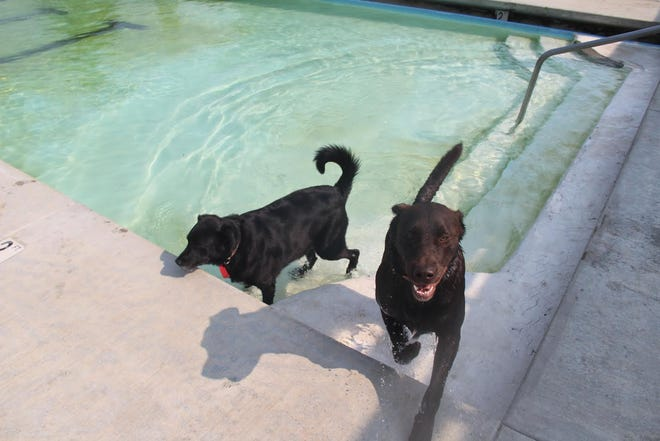 Dogs enjoy a dip at the community pool in Etna.