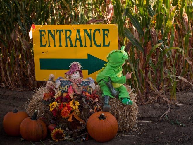 Entrance to corn maze.