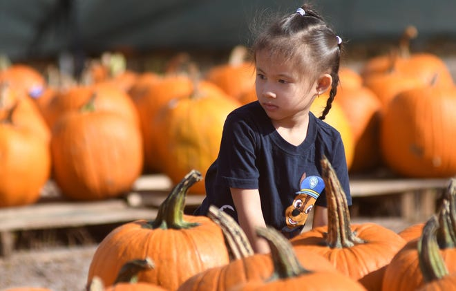 Vy Ryan, 4, looks around at pumpkins at Barr Evergreens and Pumpkin Patch in Wilmington, N.C., Monday, October 5, 2020. This is Ryan's first Halloween experience after moving from Vietnam earlier this year.  The business is located at the corner of Shipyard and Independence and is open seven days a week from 9 a.m. to 9 p.m.   [MATT BORN/STARNEWS]