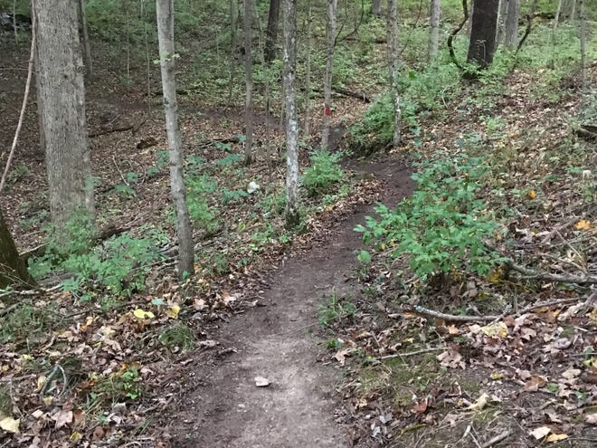 A trail at Paint Creek State Park which was recently cleared by a group of volunteers.