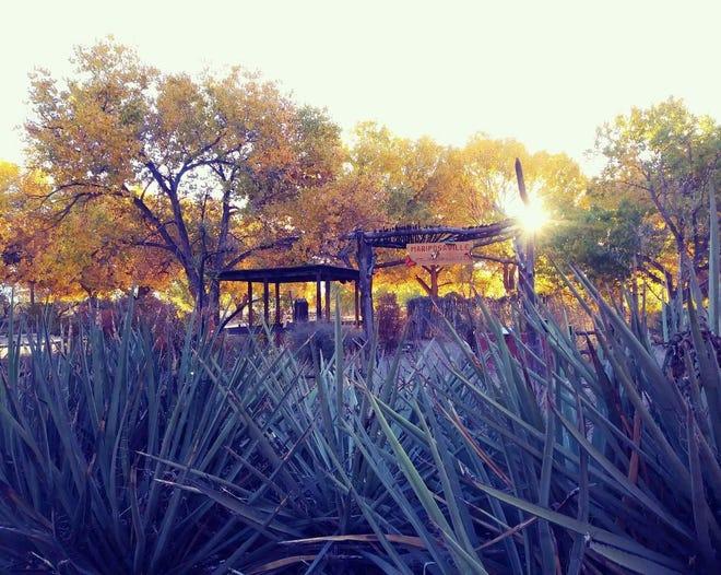 Rio Grande Nature Center State Park, Albuquerque, NM