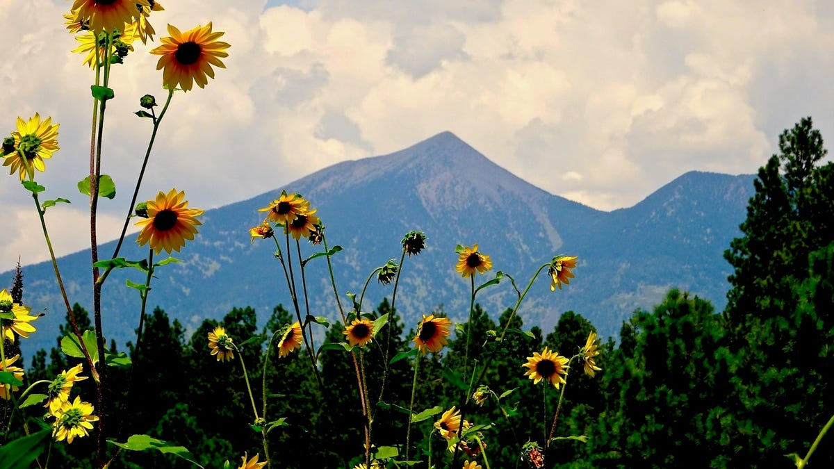 Flagstaff to Grand Canyon is one of Arizona's most gorgeous drives. Here's how to do it.