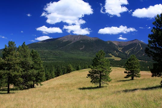 The San Francisco Peaks are the remnants of a stratovolcano that once rose to a height of 16,000 feet.