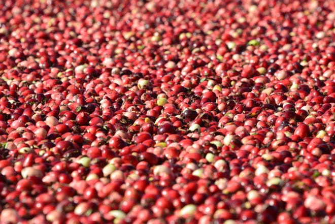 Wisconsin grows over 60 percent of the nation's crop, making our state the top cranberry producing state in the nation.