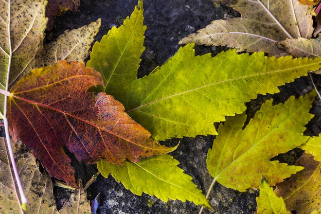 Leaf pickup begins Oct. 19 in Beaver.