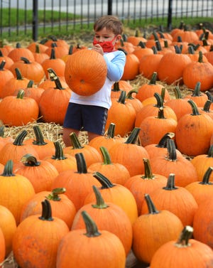 Pick out the biggest, best pumpkin you can find and enter it in the virtual pumpkin decorating contest, hosted by A Ghostly Encounter of St. Augustine. Shown is Avery Moresa, 4, in Riverside on Oct. 4.
