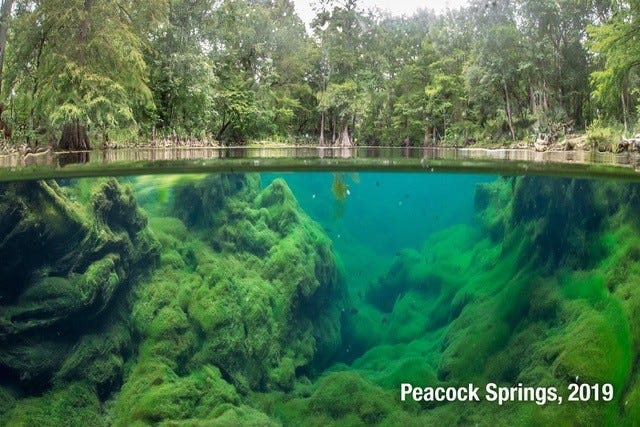 Wes Skiles Peacock Springs State Park in Live Oak has two major springs, a spring run and six sinkholes, all in near pristine condition. Protecting waterways like this is the goal of an initiative in Orange County. (Invading Seas)