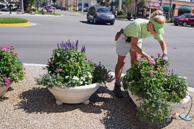 Linda Lewis, one of the Venice Area Beautification Inc. Venice in Bloom team, tends to one of the flower pots near Venice and Nokomis avenues in May. The city earned both the Coolest Downtown Award and the Outstanding Achievement Award for Landscaped Areas at the 2020 America in Bloom National Awards Program.