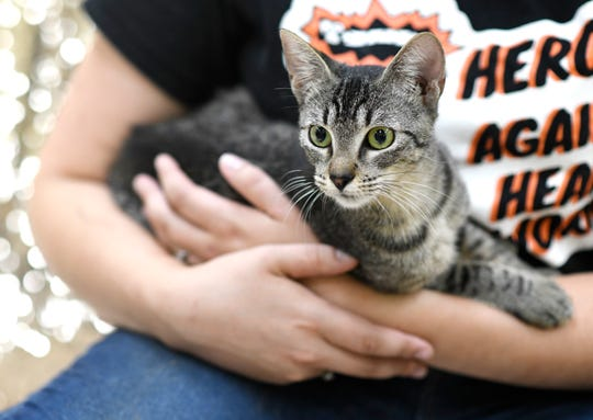 Autumn Breeze is a 10-month-old Domestic Short Hair. She is very playful and loves her toys. Autumn Breeze has been at the Gulf Coast Humane Society since January 2020. Wanna meet Autumn Breeze? Call the Gulf Coast Humane Society at 361-225-0845 or visit https://www.gchscc.org