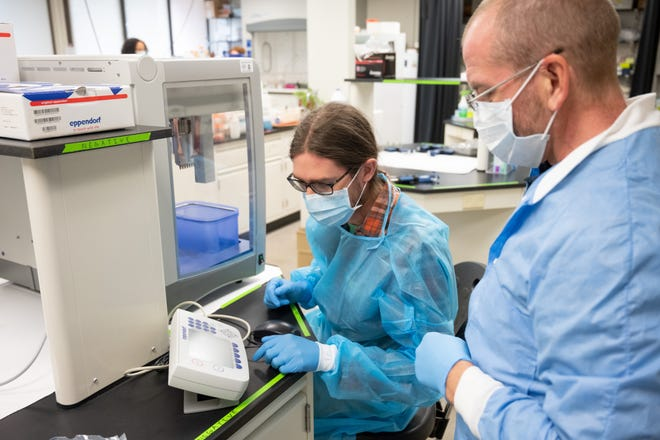 Lab manager Elizabeth Gordon, left, and Mark Zabel, an associate professor of microbiology, prepare to test saliva samples for COVID-19 in Zabel's lab on the Colorado State University campus on Sept. 8, 2020.