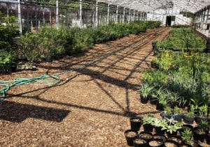 Richmond Parks and Recreation Department will conduct monthly gardening classes from October through March.