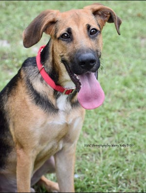 Tye is an adorable 1-year-old hound mix currently weighing 49 pounds. This handsome boy loves the company of other dogs and kids (can be cat tested). He has a laid back, yet silly personality and can't wait to find his furever home. Meet Tye at our shelter!
