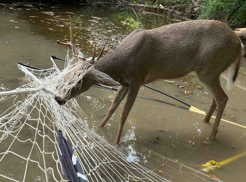 Two Missouri conservations agents freed this deer at a metro area home.