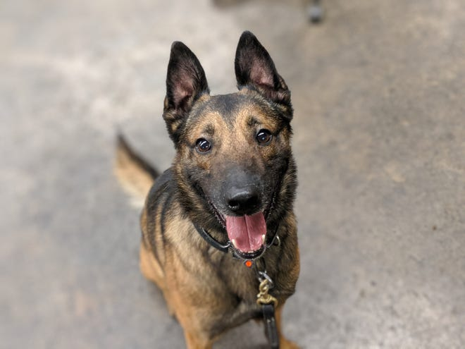 U.S. Customs and Border Protection drug-detection dogs such as Bruno helped officers in Cincinnati seize drugs with a street value of more than $369 million in the fiscal year that ended Sept. 30.