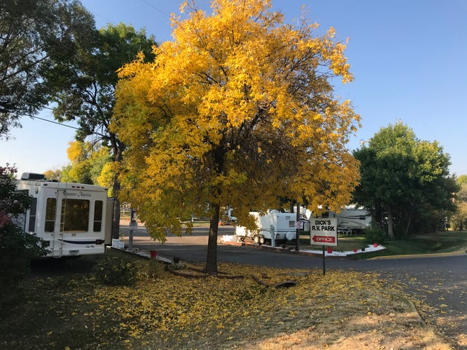 Trees are popping with color in Great Falls.