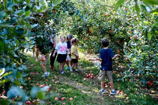 Children look for ripe apples at Sky Top Orchard in Flat Rock September 12, 2019.