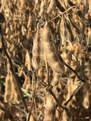 USDA's Quarterly Grain Stocks Report brought adjustments forward to the October WASDE, which made adjustments to demand, and the markets reacted in a big way.