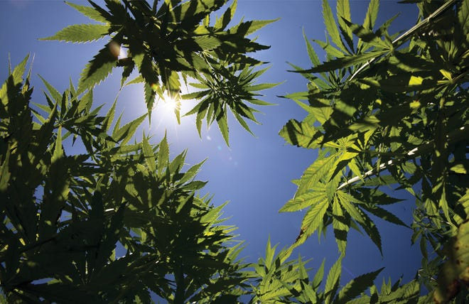 Industry leaders say changing regulations, market uncertainty likely causing some to leave hemp industry.