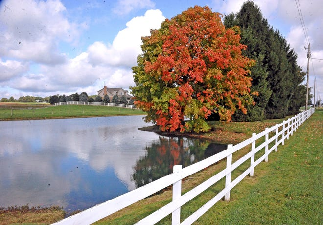 This tree shows brightly in a picturesque setting in Salt Creek Township near the unincorporated community Maysville. Peak time for fall leaves is between Monday, Oct. 12 and Oct. 19 in Wayne, Holmes and Ashland counties.