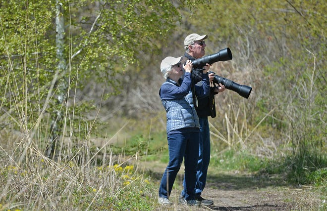 An Erie County Gaming Revenue Authority grant to the Erie Bird Observatory will enhance local opportunities for birders like Peggy Kearney, 74, and husband Pat Kearney, 74, of Clarion County, shown photographing migrating songbirds May 13 at Presque Isle State Park.