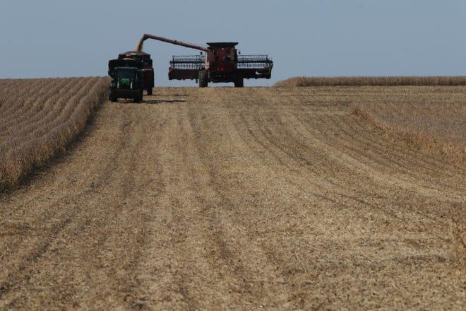 A farmer fills a grain cart while harvesting a field of soybeans Wednesday Oct. 7, along highway 16, near Denmark.