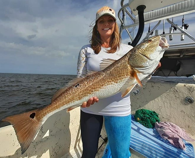 Stacey Hasty of Inglis caught this 33-inch redfish while fishing near Crystal River with Capt. Marrio Castello of Tall Tales Charters during the weekend.