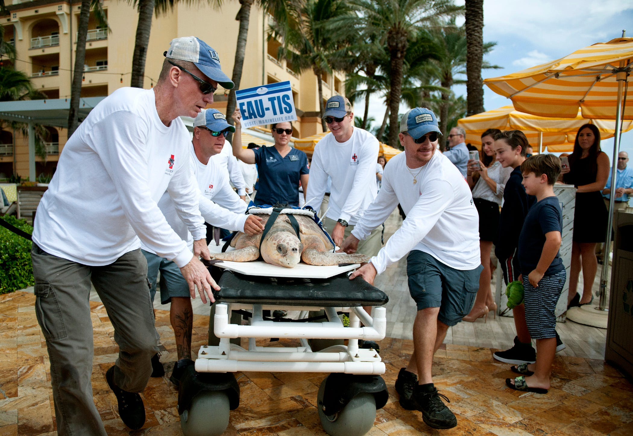 """Loggerhead Marinelife Center employees, from left, Tim Hannon, Andy Earl, Carter Viss and Brian Robertson, carry """"Eau-tis"""" a loggerhead sea turtle patient, to the ocean in 2018."""