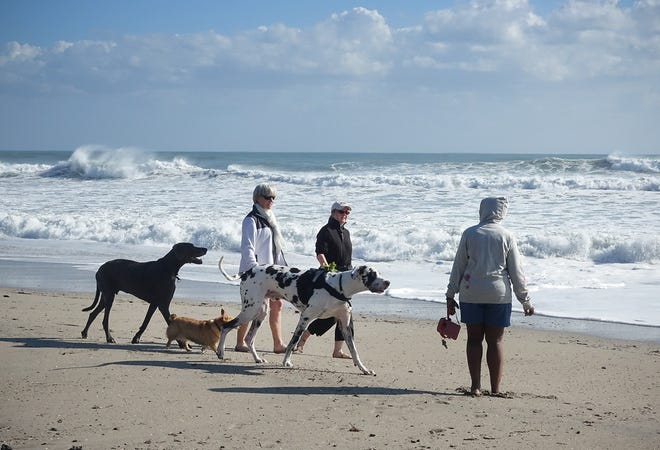 A parade of well-mannered pups is a frequent sight at Jupiter Beach. The Friends of Jupiter Beach hosts monthly cleanups and supplies waste-bag stations to keep the beach clean and dog-friendly.