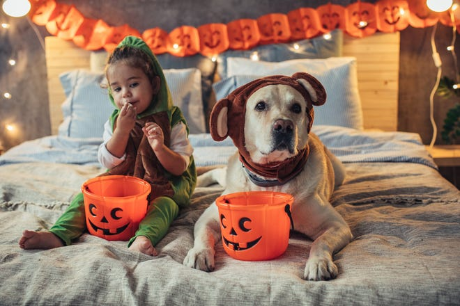 Tips for celebrating Halloween with your furry friend.