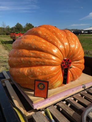 Pumpkins - big, small or cooked - are the focus of a variety of fall events.