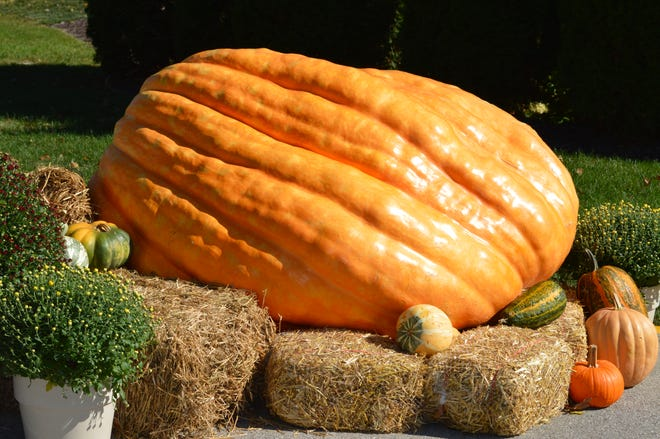 This giant pumpkin, grown by Tom Montsma, is sitting outside Lake Country Health Center in Delafield.
