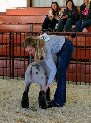 Annette Augustine guides her lamb during the senior showmanship competition at the Loudonville Livestock Club lamb show Thursday. Augustine dominated the show, winning grand champion, middleweight champion and senior showmanship honors.