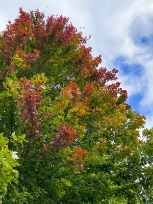 Hints of fall start to arrive in Guernsey County.