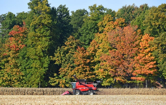 Corn is harvested earlier this month on Quaker Road, west of Bucyrus.