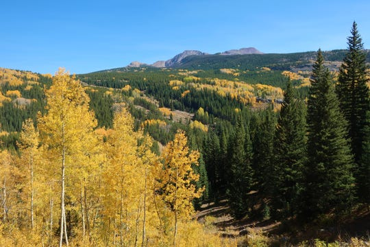 An early October view of the peak fall colors from the San Juan Scenic Historic Byway north of Durango,  Colorado.
