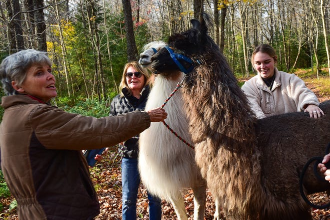 From left, Anne Phinney, owner of Moose River Farm in Old Forge, helps Susan Romano and her granddaughter Lena Romano with a llama trek in the woods on Friday, Oct. 9, 2020.