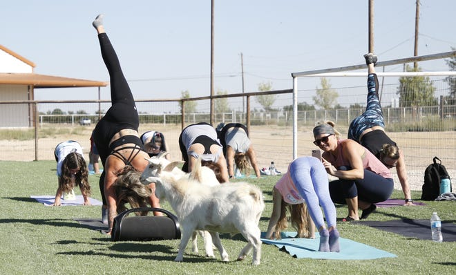 Carlsbad Yoga Barre celebrates its grand opening on Oct. 10, 2020 with a session of Goat Yoga which is one part yoga, one part pet therapy.