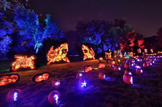 Expertly carved pumpkins turn into sharks, celebrity faces and dinosaurs in the mesmerizing Nights of the Jack in Calabasas.