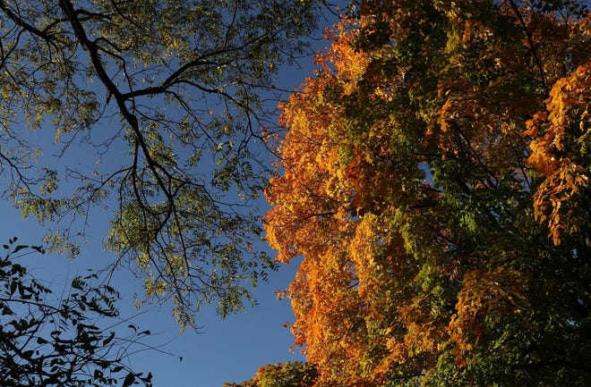 Orange leaves in the morning sun brighten up Schiller Park in German Village. Trees are changing color across the state, but the best time to see peak colors will be Oct. 19-26.